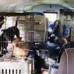 Motorista resgata cães gatos enchentes Furacão Florence