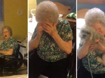 neto surpreende vovó deprimida novo cãozinho