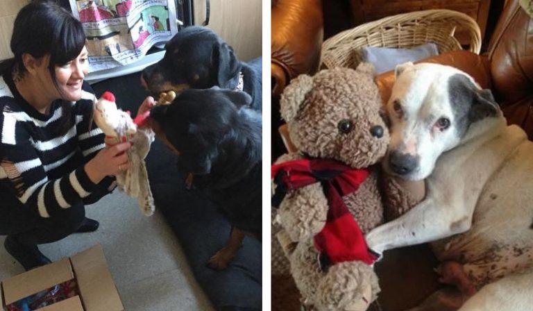 enfermeira e cães