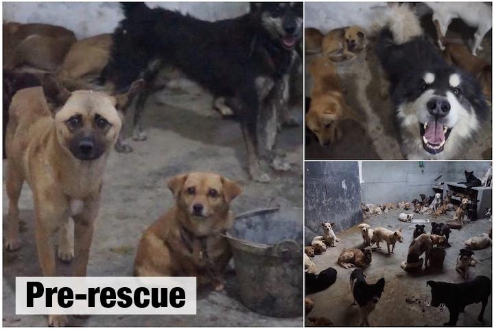 120 cachorros salvos gangue ilegal carne China