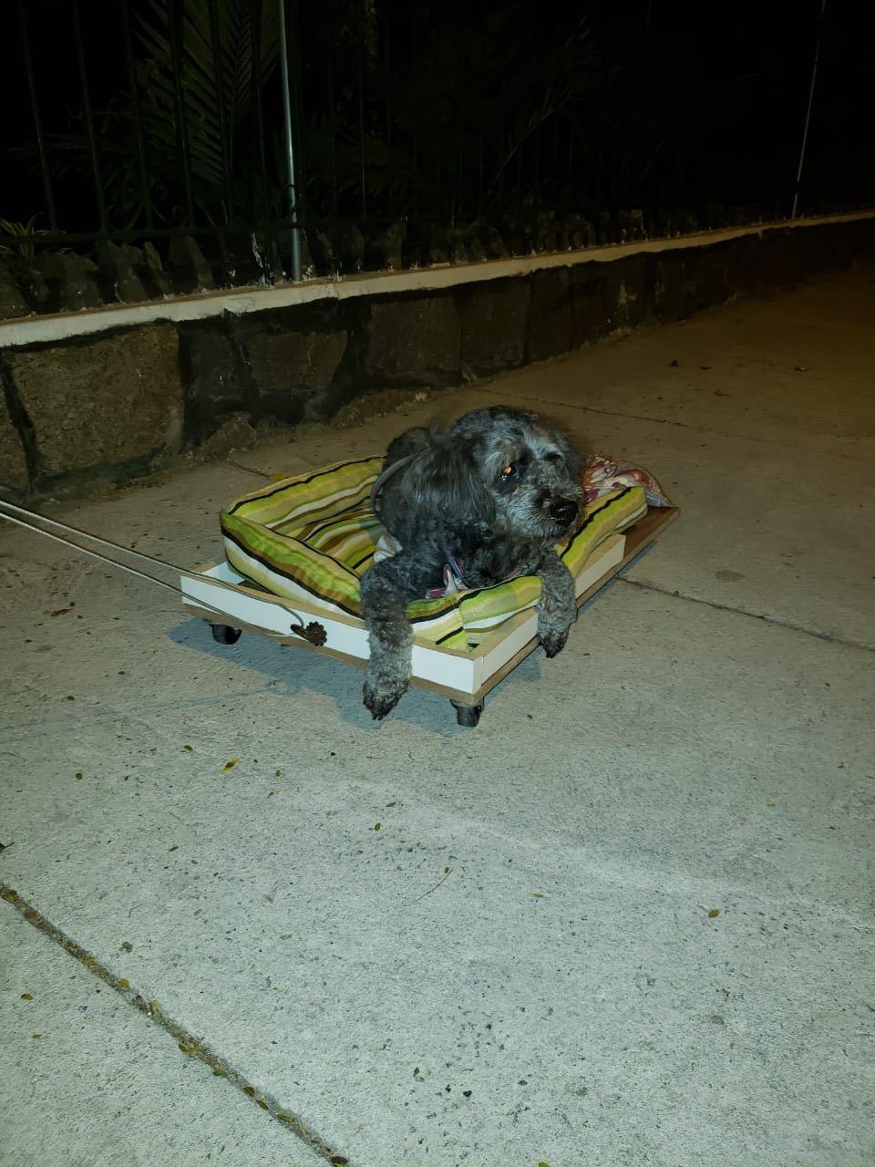 homem constrói carrinho cadelinha idosa passear