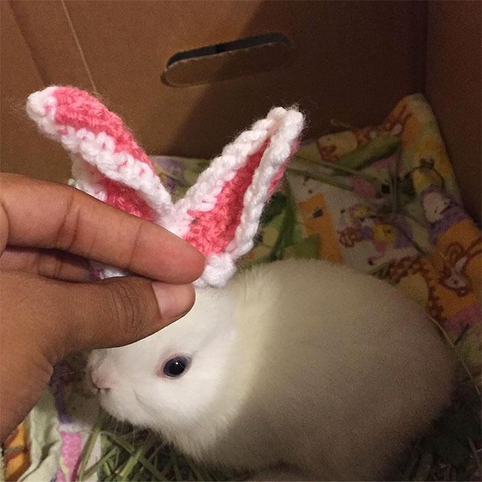 Coelho Mimi nasceu sem orelhas e com apenas três pernas