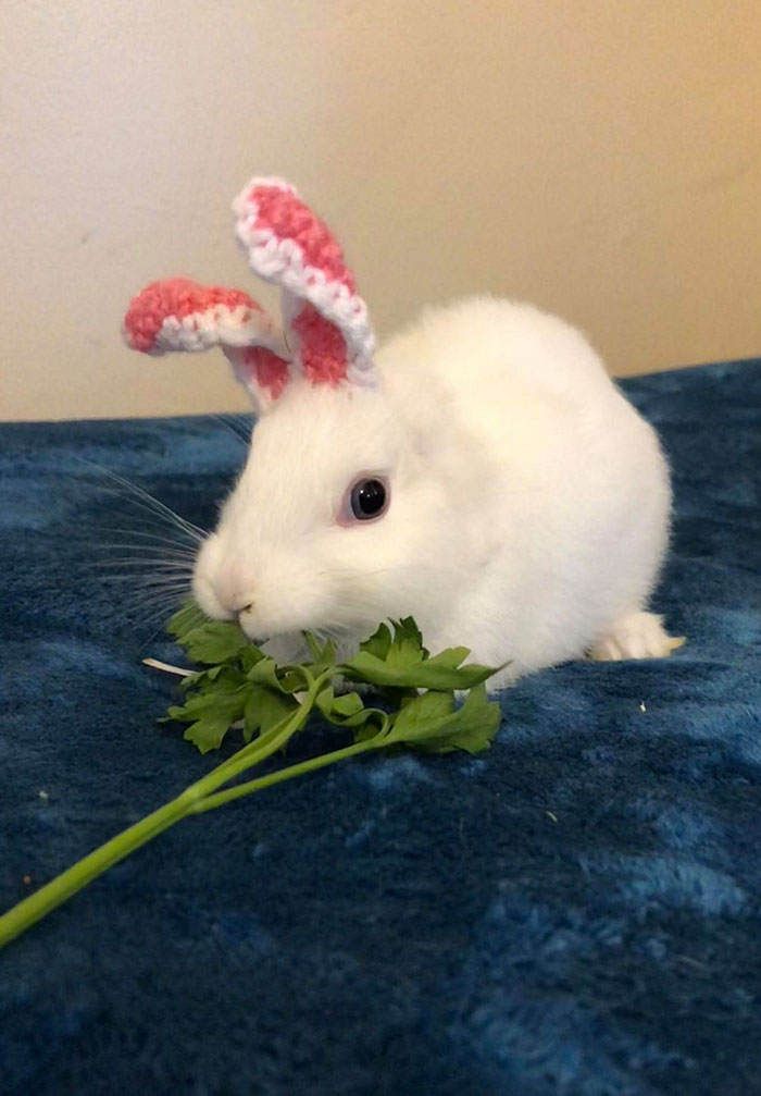 As orelhas de crochê personalizadas de Mimi são absolutamente adoráveis