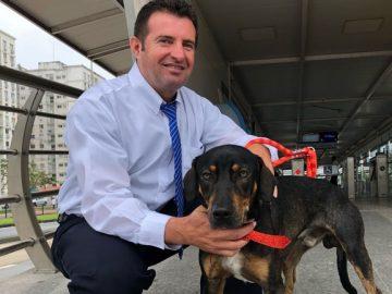 motorista resgata adota cachorro abandonado pista