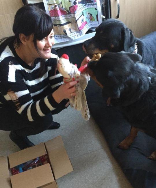 enfermeira com cães