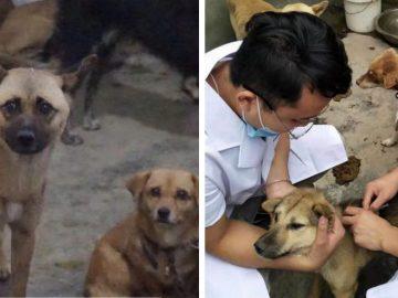120 cachorros são salvos de gangue ilegal de carne na China 1