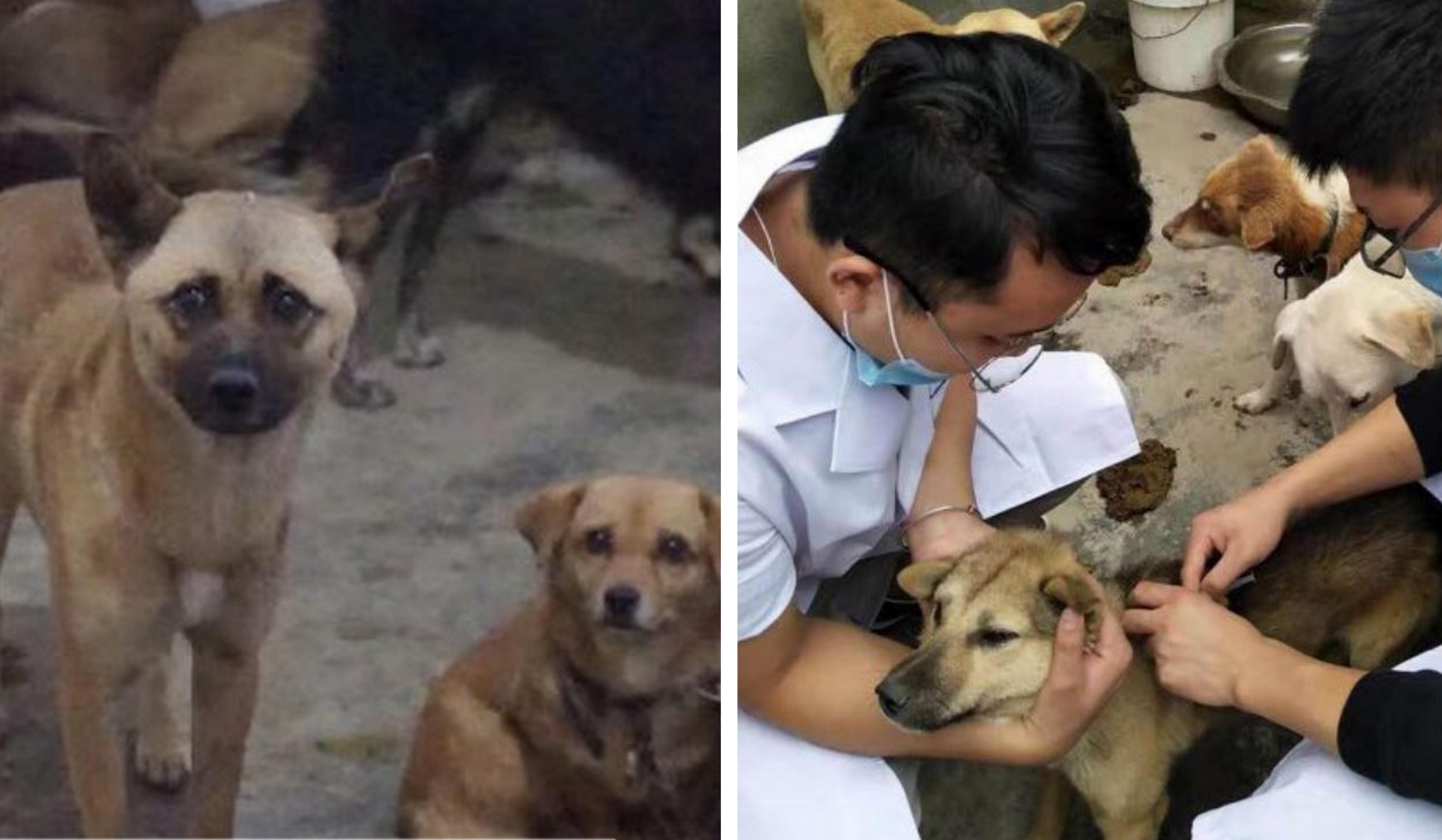 120 cachorros são salvos de gangue ilegal de carne na China 2