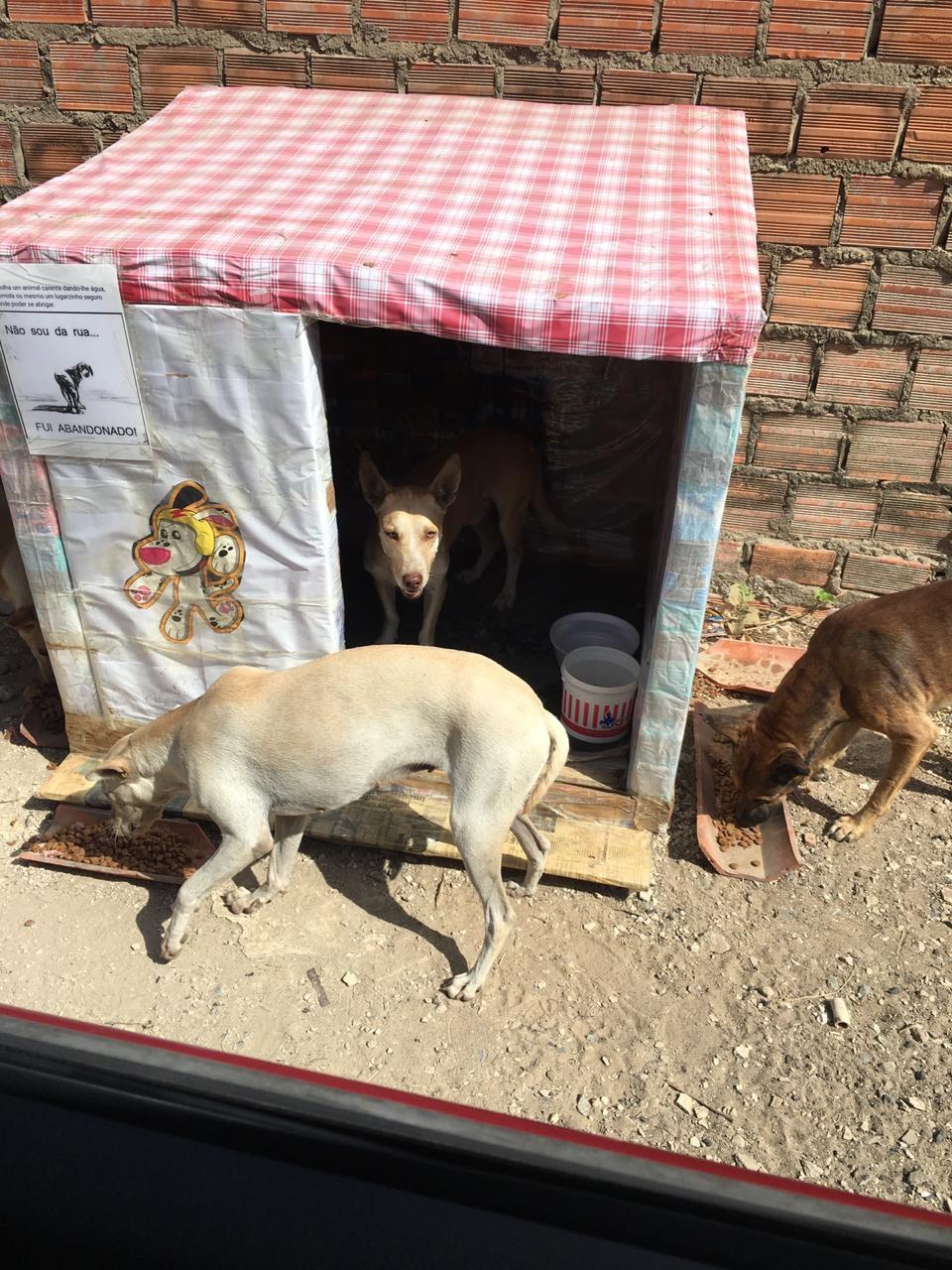 mulher casinhas caixas leite alimentar cães rua