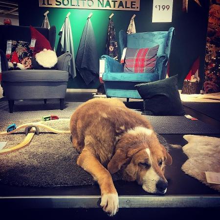 Loja italiana abre as portas para cães de rua e incentiva adoção