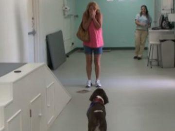 Mulher desaba de alegria ao ver seu cachorro andar novamente