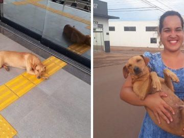 Cachorro espera por quase sete horas dona que fazia Enem