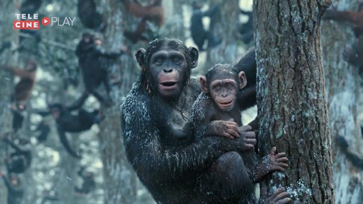 campanha conscientiza tráfico macacos