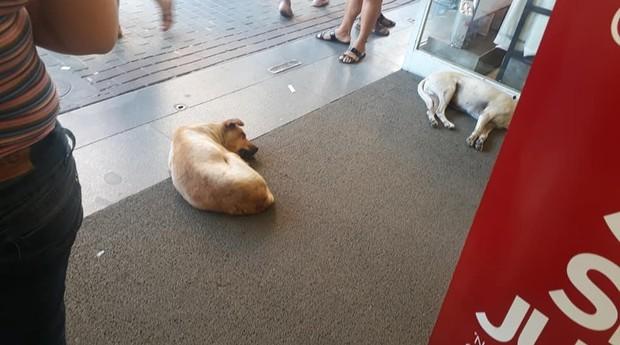 Cachorros se resfriam em loja no Rio de Janeiro (Foto: Reprodução)