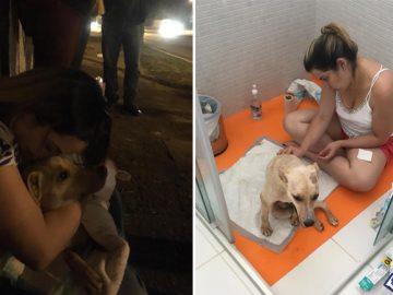 jovem percorre mais mil quilômetros salvar cãozinho atropelado