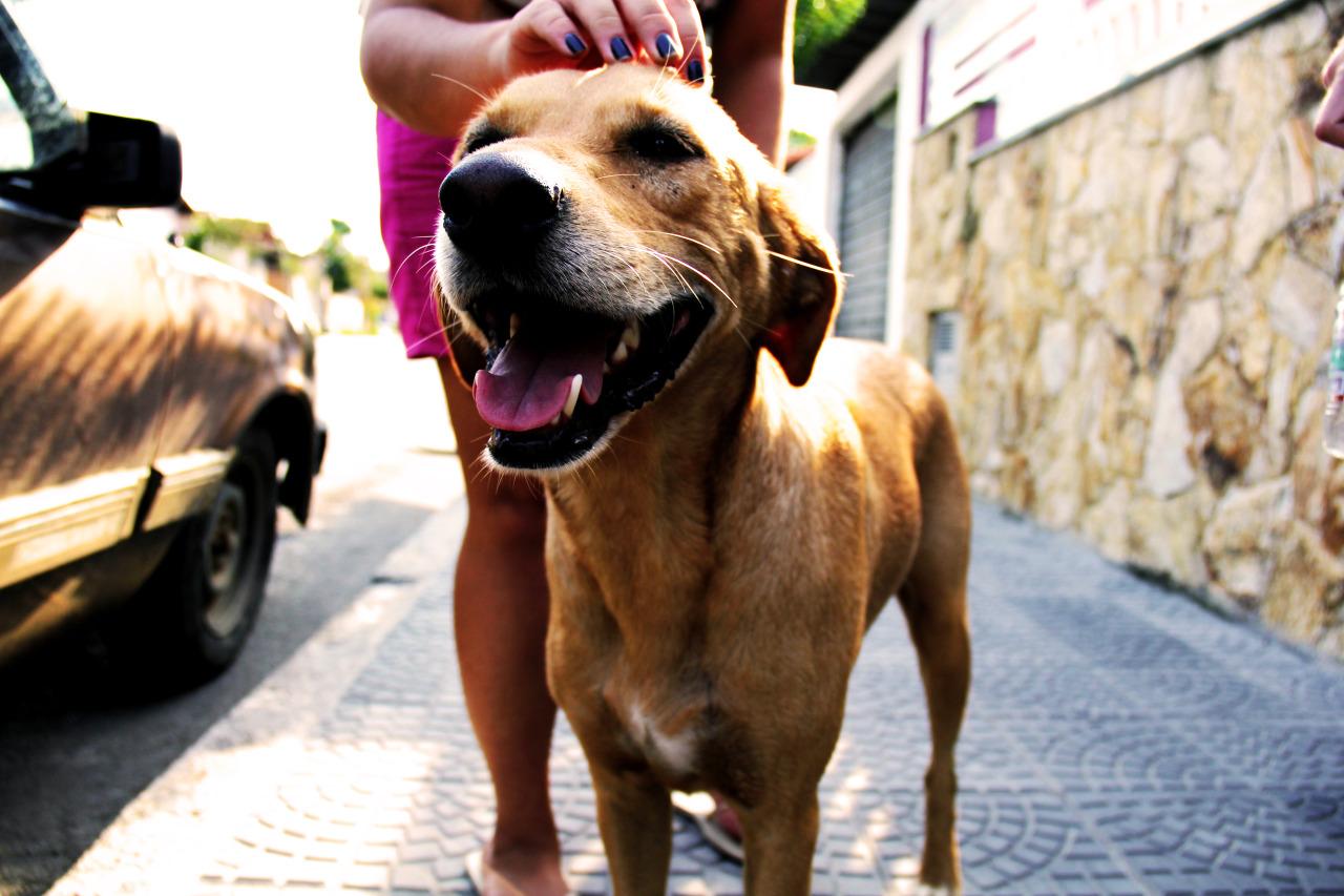 Pensando nos animais, Avenida Paulista terá Ano Novo com fogos sem barulho