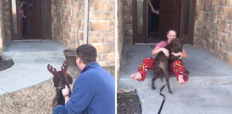 Pais adotam o cão favorito da filha do abrigo onde ela é voluntária