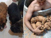 """Homem encontra cinco """"bolinhas"""" de lama em um poço e descobre que são cinco filhotes muito fofos!"""