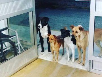 Cachorros esperam morador de rua ser atendido do lado de fora do hospital