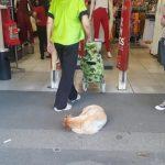 Loja no Rio libera entrada para cachorros de rua escaparem do calor
