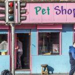 Reino Unido anuncia proibição da venda de cães e gatos em pet shops 2