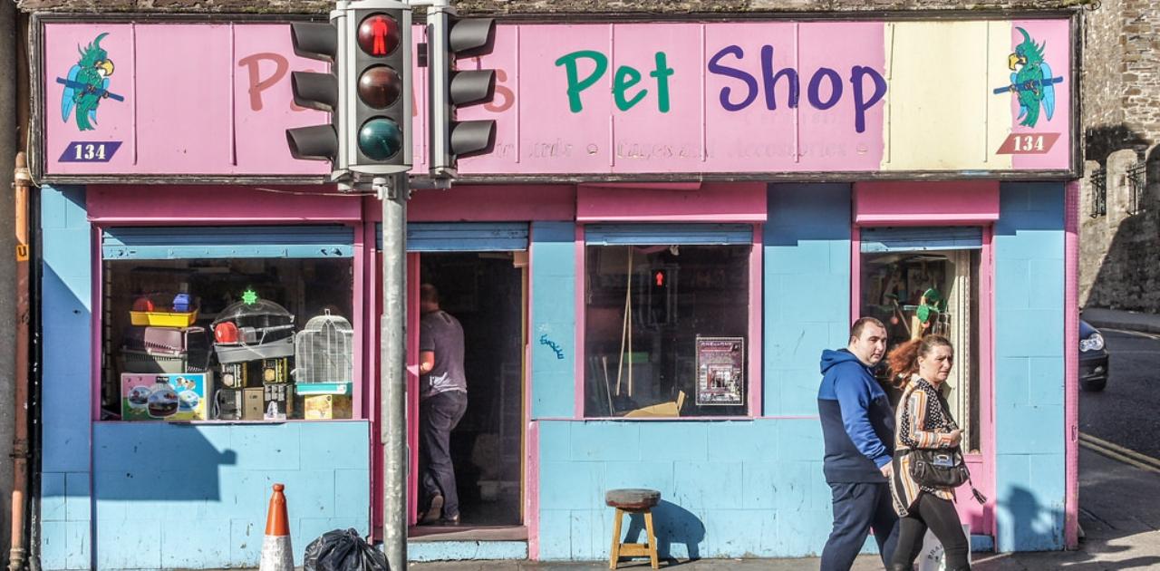 Reino Unido anuncia proibição da venda de cães e gatos em pet shops 1