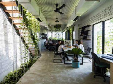 O escritório repleto de plantas nativas que busca oferecer um ambiente de trabalho mais saudável e menos estressante 4