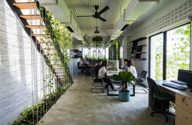 O escritório repleto de plantas nativas que busca oferecer um ambiente de trabalho mais saudável e menos estressante 2