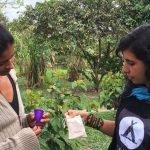 coletores menstruais indígenas amazônia