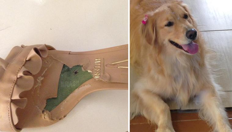 cachorra destrói sandálias cliente ganha par novo