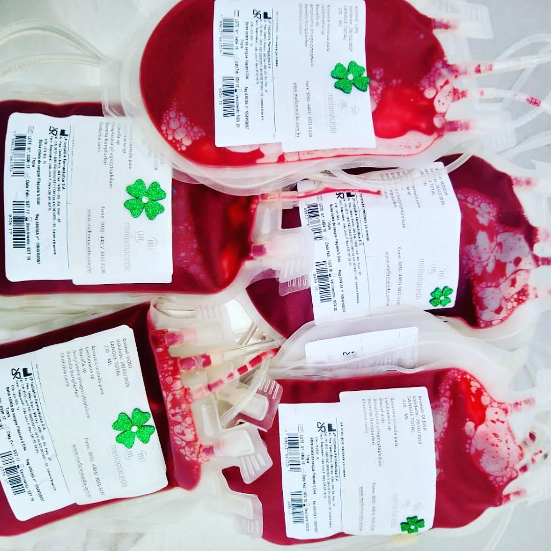 leve seu pet doar sangue animais brumadinho