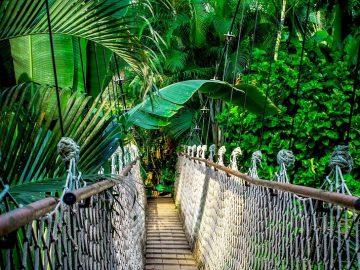 Noruega doará US$ 70 milhões para preservação da floresta Amazônica 1