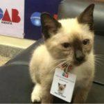 """Gatinho de rua é """"contratado"""" pela OAB e ganha até crachá com foto"""