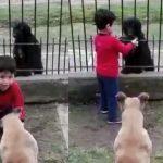 Menino divide ração do cão dele com outro que estava na rua e emociona
