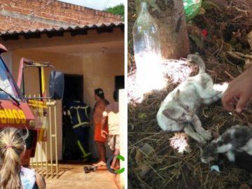 Vizinho entra em casa pegando fogo para salvar gatos em Guaíra (PR)