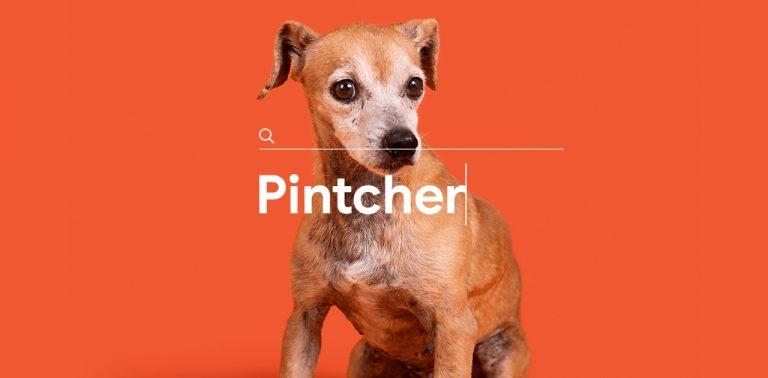 Empresa de ração incentiva adoção de vira-latas com nomes errados de raças de cachorros