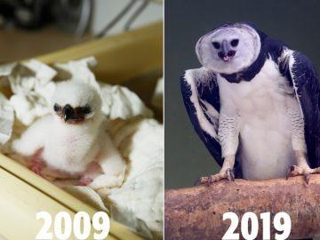 Programa de reprodução animal completa 10 anos e comemora sucesso 11