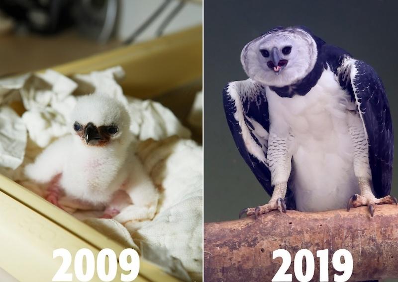 Programa de reprodução animal completa 10 anos e comemora sucesso 5