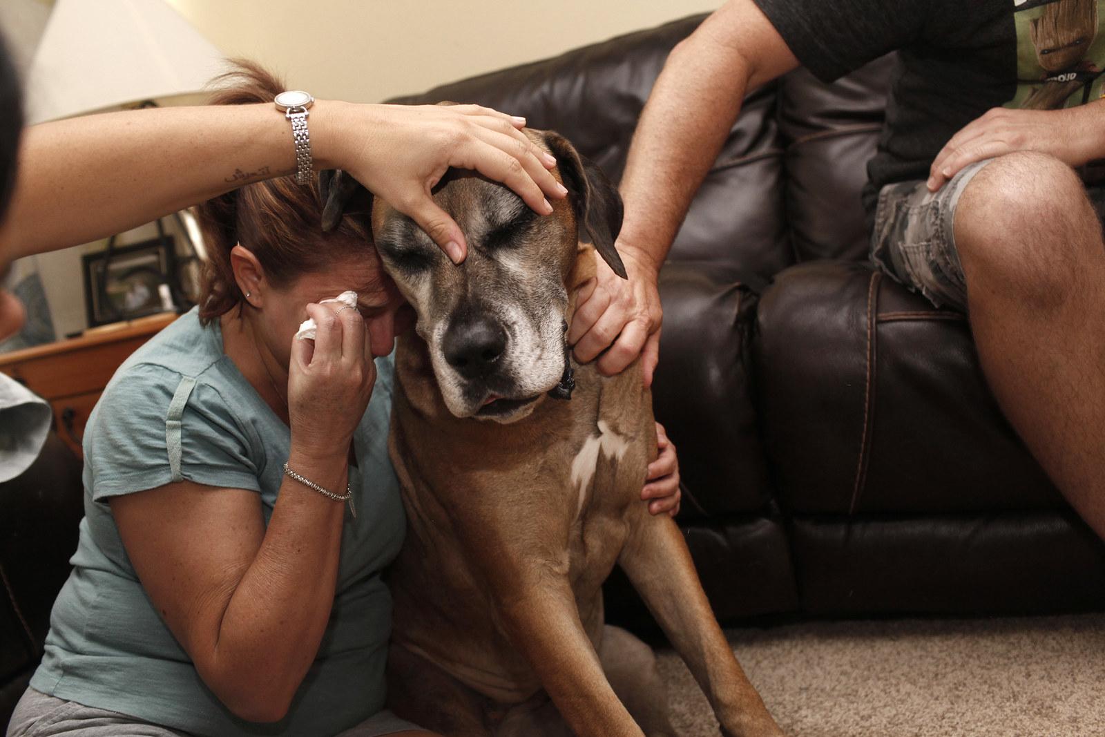 Fotógrafo capta os últimos momentos emocionantes entre animais de estimação e seus donos