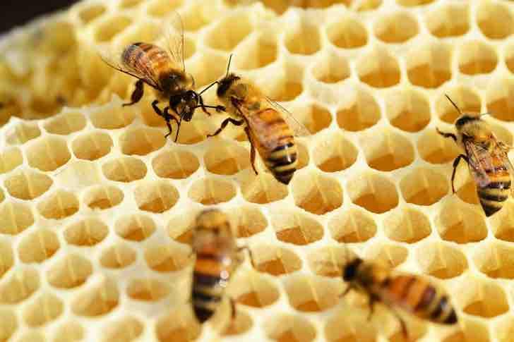 Morgan Freeman transforma fazenda de 1 milhão de m² em santuário de abelhas