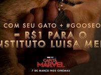 Marvel vai doar R$ 1 para cada foto de gatinho compartilhada para promover Capitã Marvel