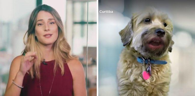 """Prefeitura de Curitiba aproveita """"meme da Betina"""" para promover adoção de animais"""