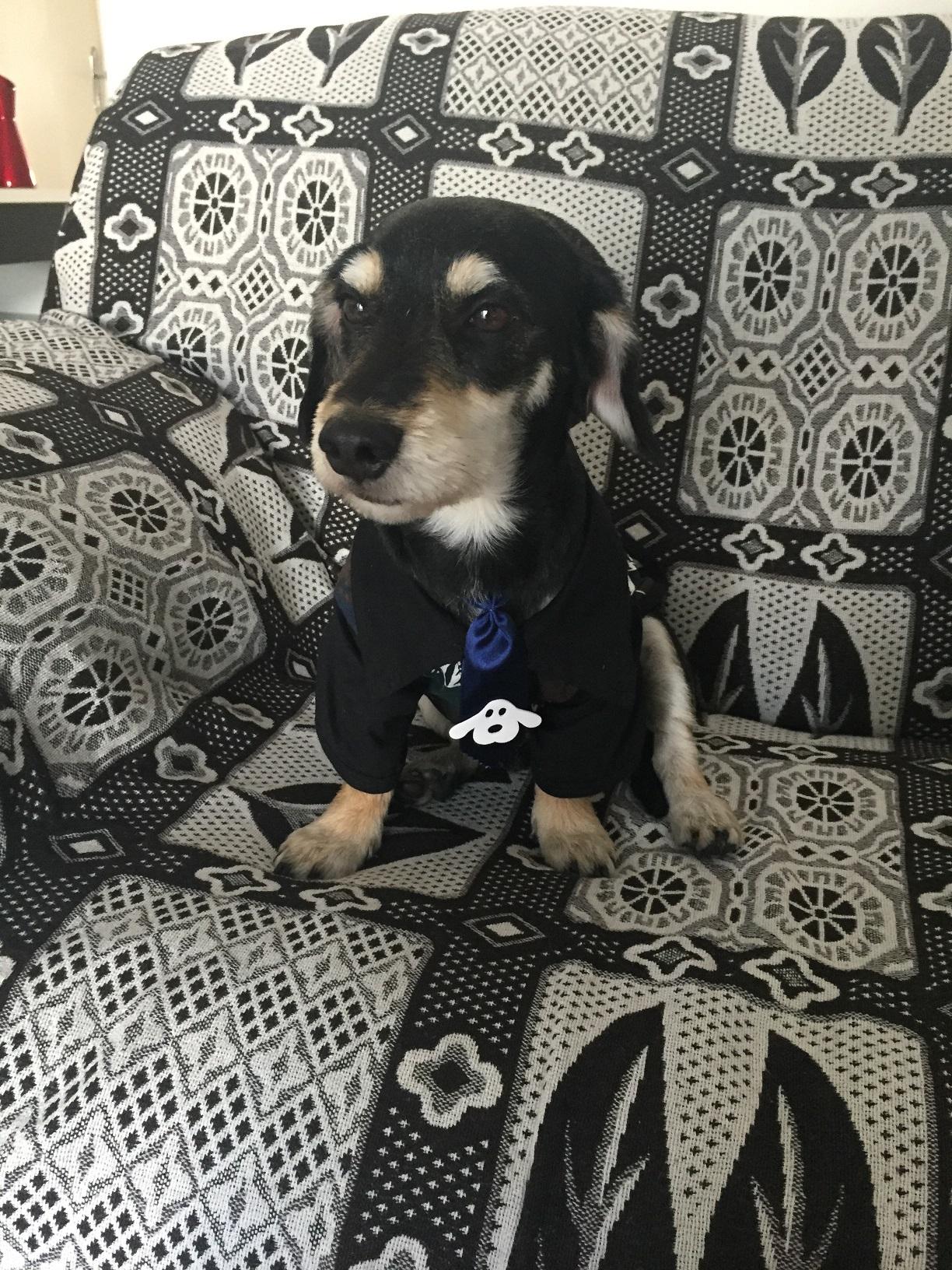 Esse cãozinho é tão amado que ganhou uma casa própria equipada até com câmeras de segurança