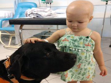 criança e labrador no hospital