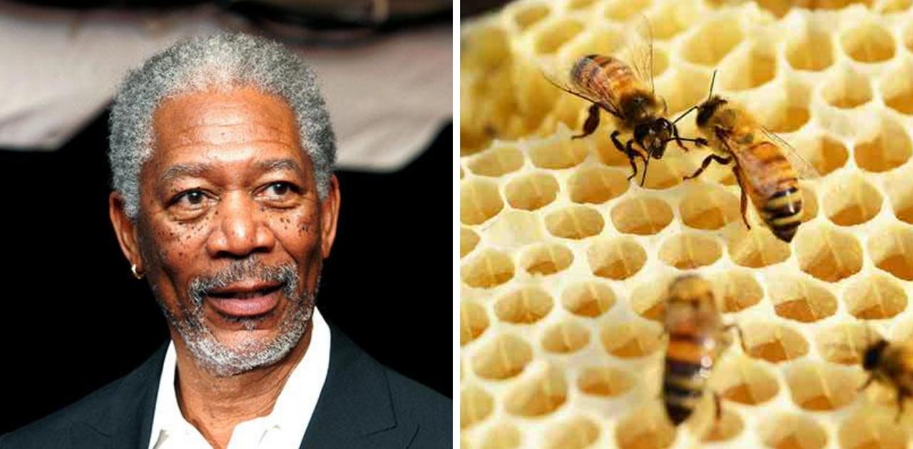 Morgan Freeman transforma sua fazenda de 1 milhão de m² em santuário de abelhas