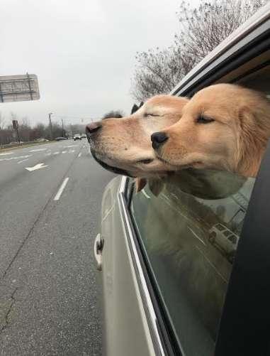 """Cãozinho idoso e cego faz amizade com filhote que vira seu """"cão-guia"""""""