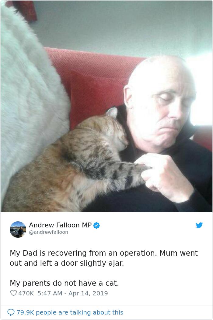 Homem se recuperando de cirurgia acorda com um gato lhe fazendo carinho