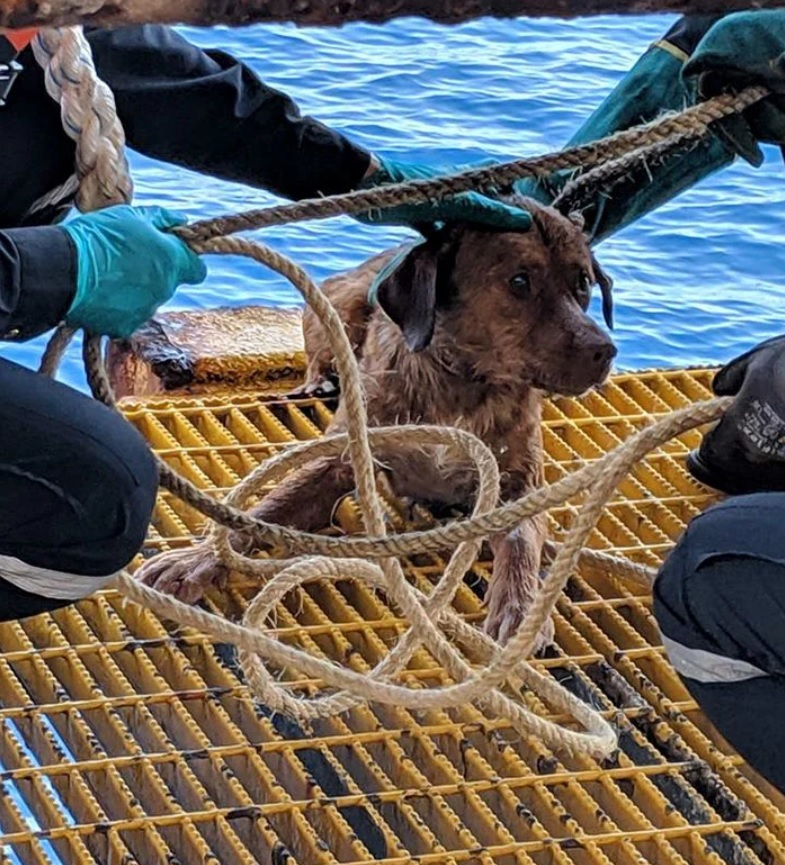 Cachorro perdido em alto-mar é salvo por petroleiros na Tailândia