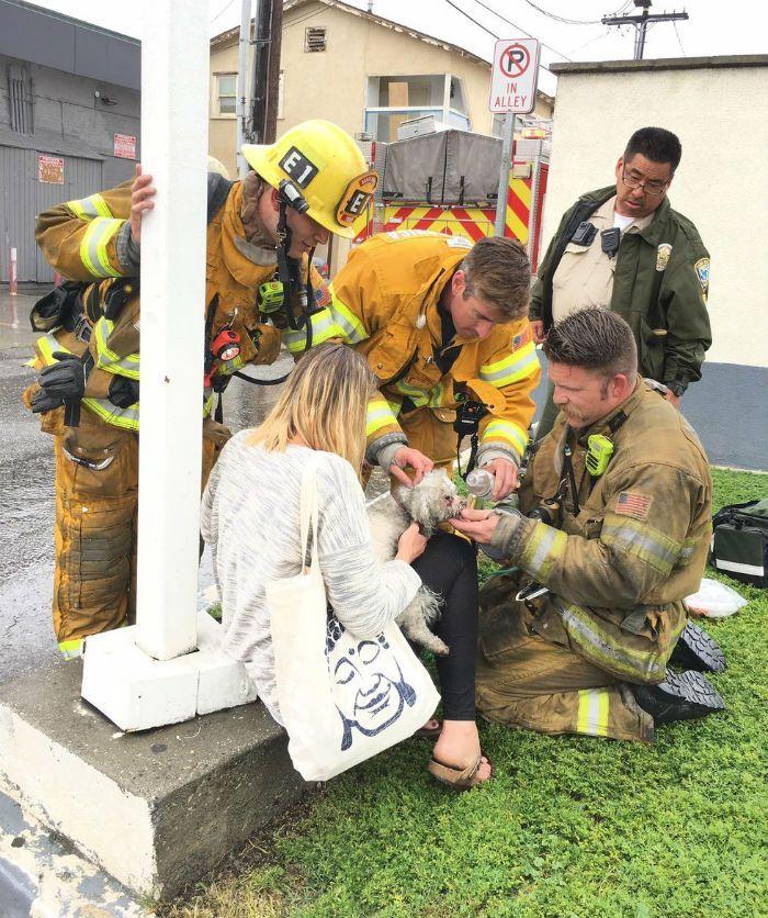 Bombeiro faz respiração boca a boca e salva a vida de cão vítima de incêndio