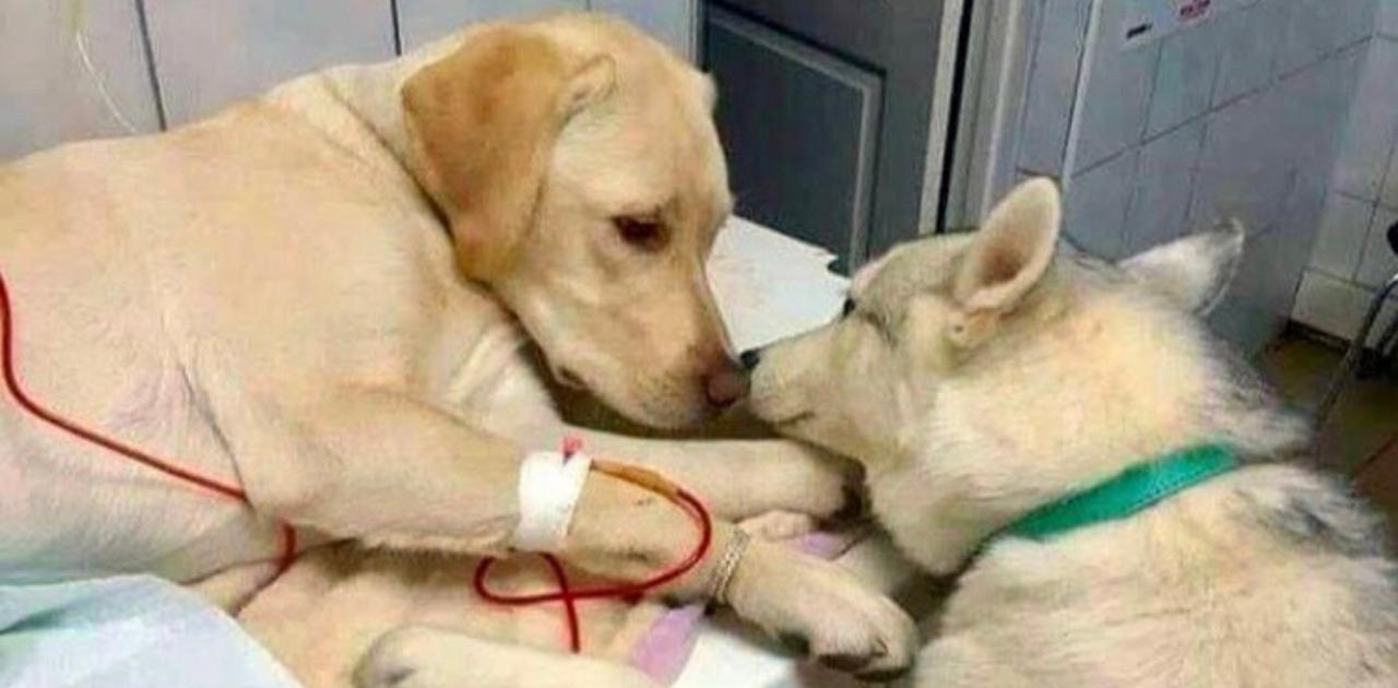 Cãozinho conforta amigo doente em clínica veterinária e foto viraliza nas redes sociais