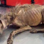 Mulher luta para salvar cão que foi despejado nas ruas e deixado para morrer